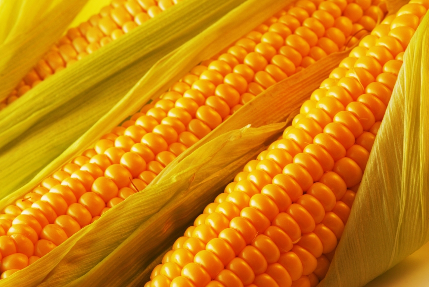 bigstock-Freshly-harvested-corn-close--14768804